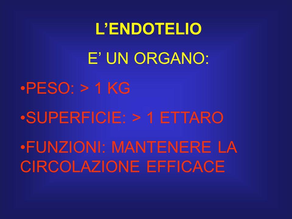 L'ENDOTELIO E' UN ORGANO: PESO: > 1 KG. SUPERFICIE: > 1 ETTARO.