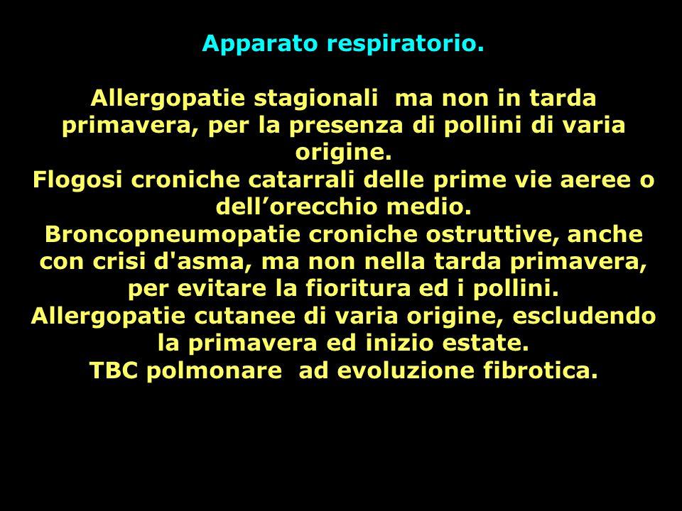 Apparato respiratorio. TBC polmonare ad evoluzione fibrotica.