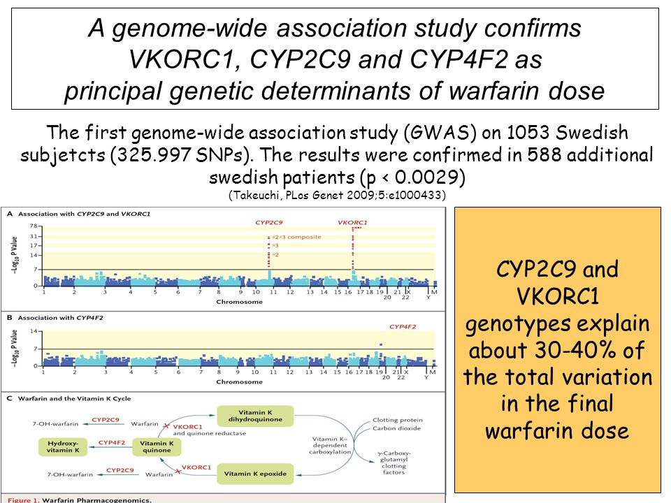 A genome-wide association study confirms VKORC1, CYP2C9 and CYP4F2 as