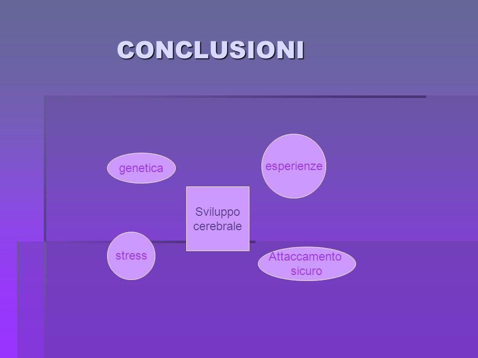 CONCLUSIONI esperienze genetica Sviluppo cerebrale stress Attaccamento