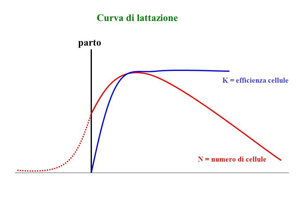 Curva di lattazione parto K = efficienza cellule N = numero di cellule