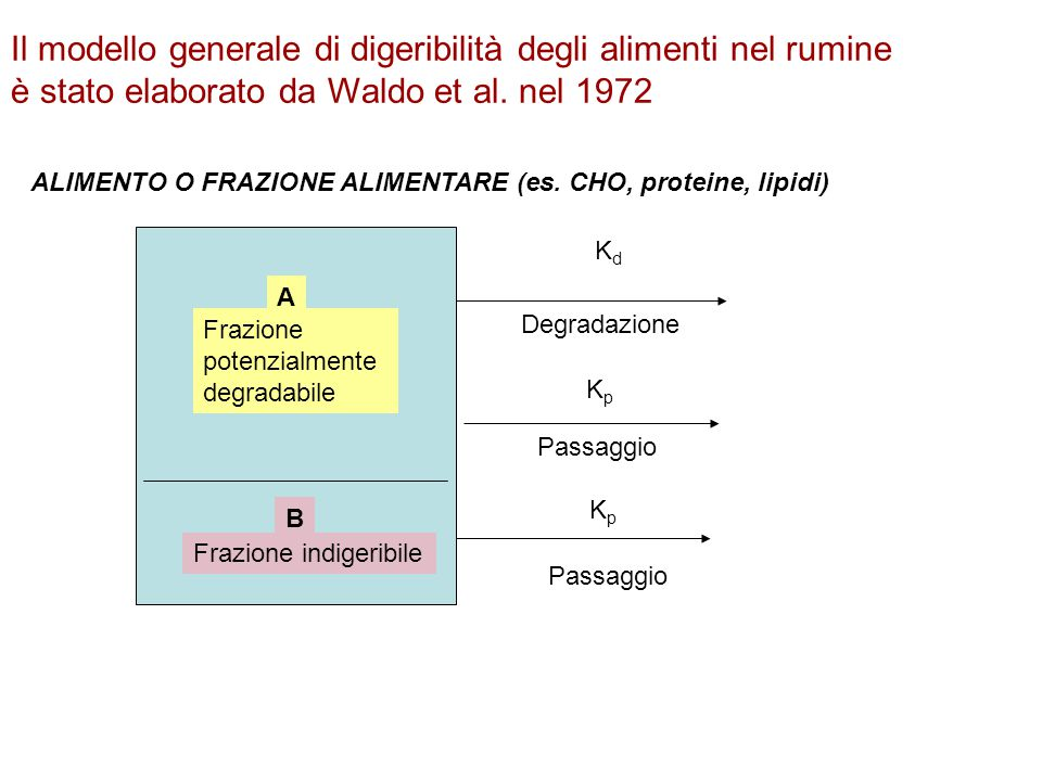 Il modello generale di digeribilità degli alimenti nel rumine è stato elaborato da Waldo et al. nel 1972