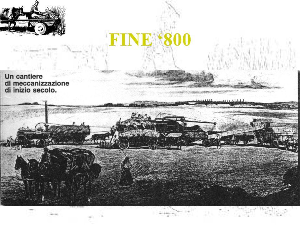 FINE '800