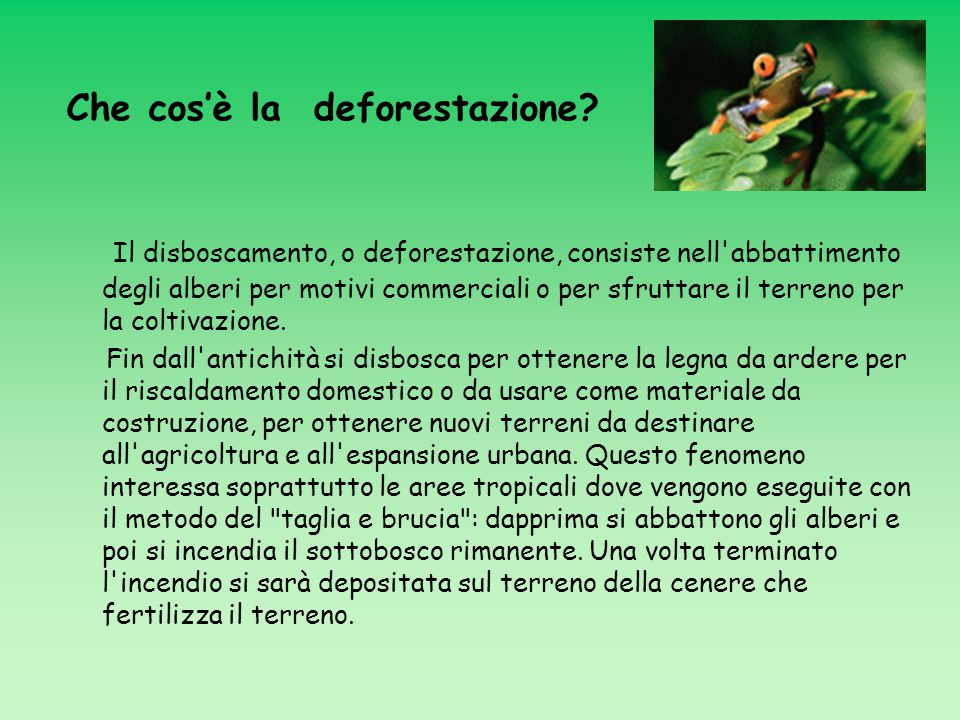 Che cos'è la deforestazione