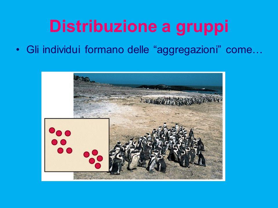 Distribuzione a gruppi