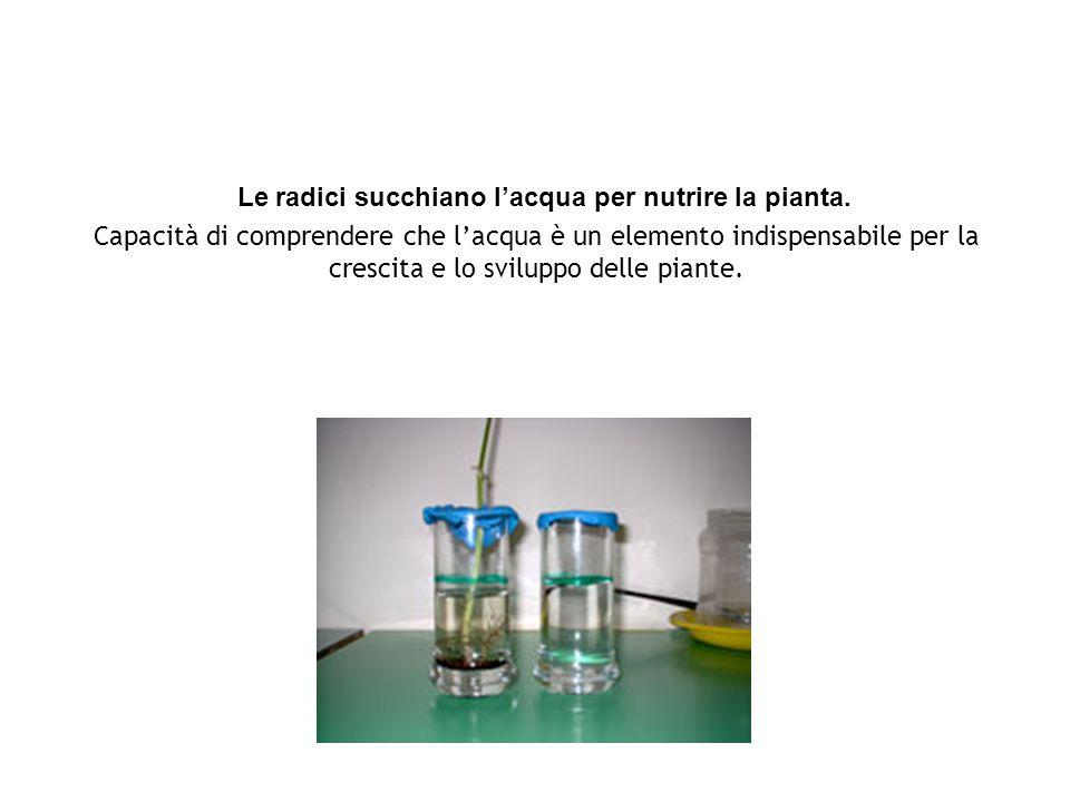 Le radici succhiano l'acqua per nutrire la pianta