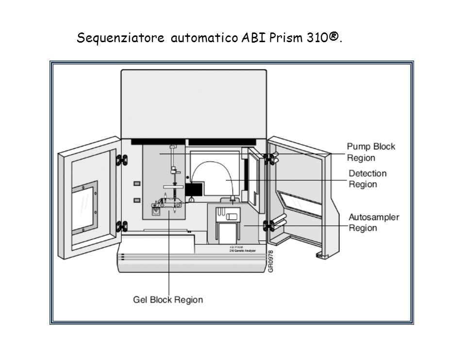 Sequenziatore automatico ABI Prism 310®.