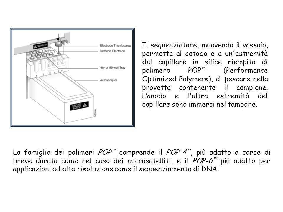 Il sequenziatore, muovendo il vassoio, permette al catodo e a un estremità del capillare in silice riempito di polimero POP™ (Performance Optimized Polymers), di pescare nella provetta contenente il campione. L'anodo e l altra estremità del capillare sono immersi nel tampone.