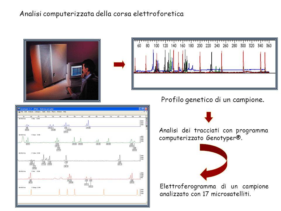 Analisi computerizzata della corsa elettroforetica