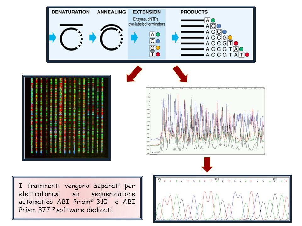 I frammenti vengono separati per elettroforesi su sequenziatore automatico ABI Prism® 310 o ABI Prism 377 ® software dedicati.