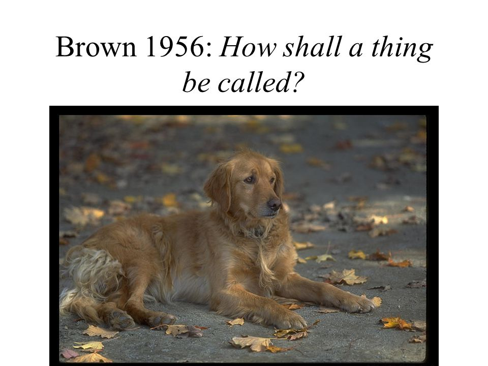 Brown 1956: How shall a thing be called