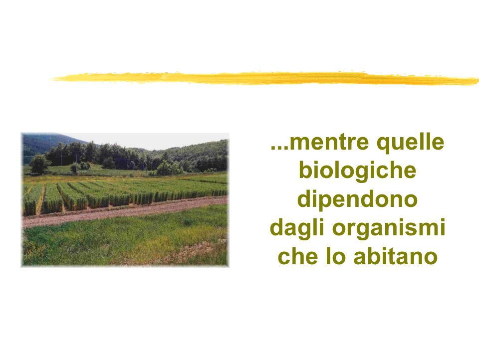 ...mentre quelle biologiche dipendono dagli organismi che lo abitano