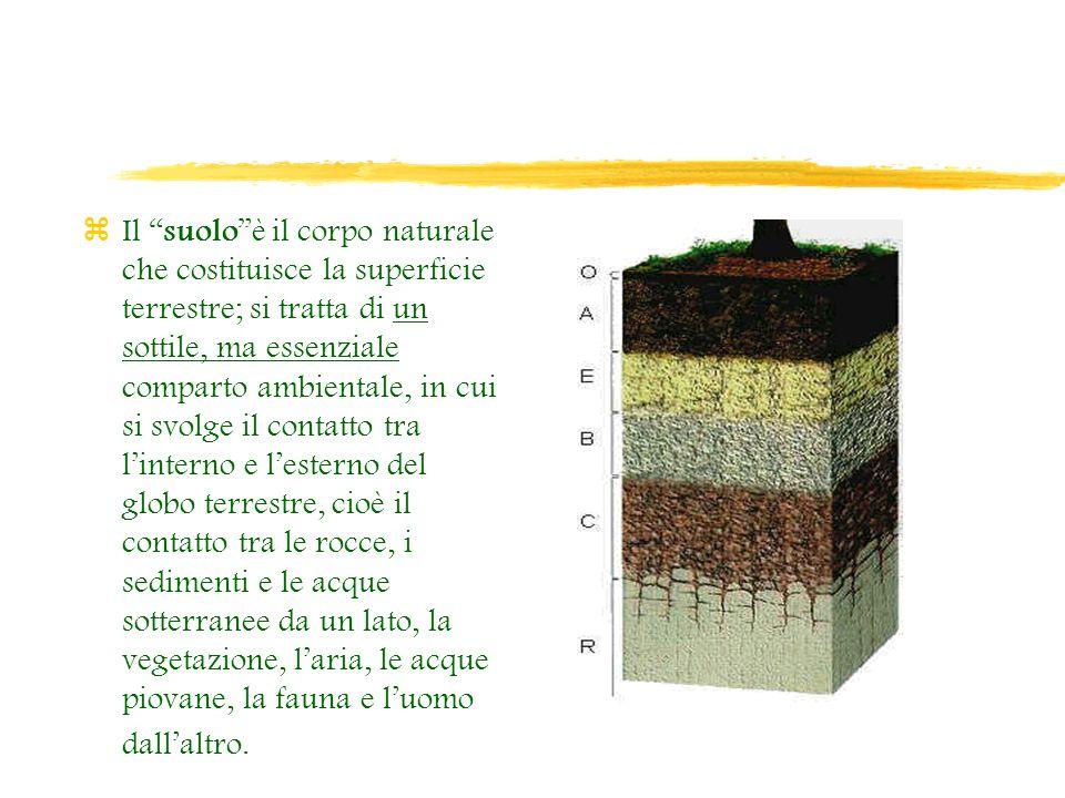 Il suolo è il corpo naturale che costituisce la superficie terrestre; si tratta di un sottile, ma essenziale comparto ambientale, in cui si svolge il contatto tra l'interno e l'esterno del globo terrestre, cioè il contatto tra le rocce, i sedimenti e le acque sotterranee da un lato, la vegetazione, l'aria, le acque piovane, la fauna e l'uomo dall'altro.