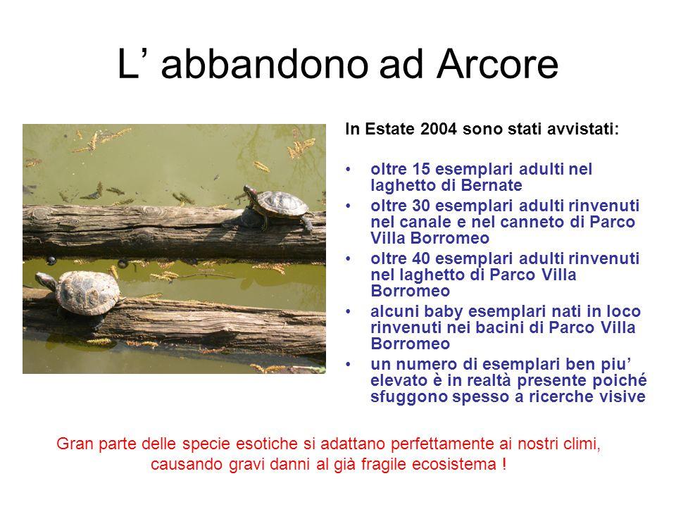 L' abbandono ad Arcore In Estate 2004 sono stati avvistati: