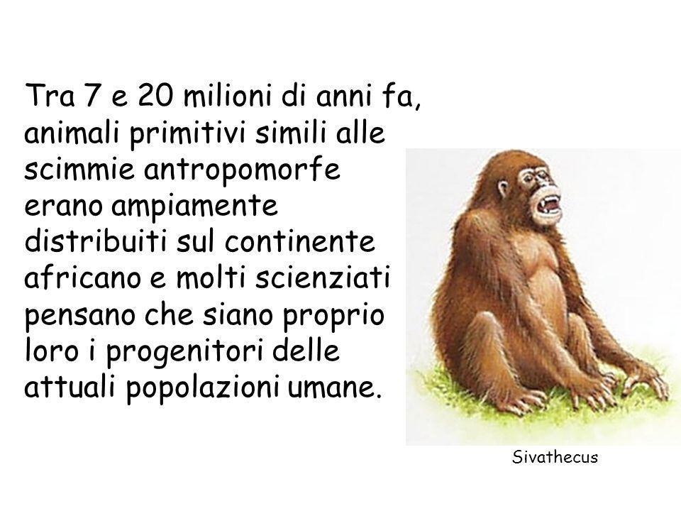 Tra 7 e 20 milioni di anni fa, animali primitivi simili alle scimmie antropomorfe erano ampiamente distribuiti sul continente africano e molti scienziati pensano che siano proprio loro i progenitori delle attuali popolazioni umane.