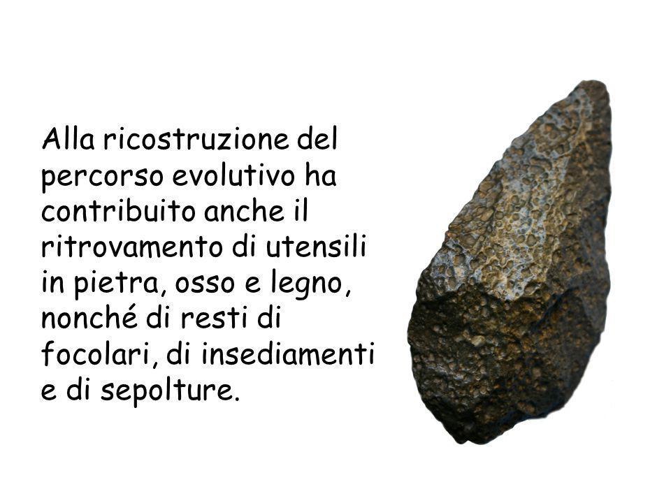 Alla ricostruzione del percorso evolutivo ha contribuito anche il ritrovamento di utensili in pietra, osso e legno, nonché di resti di focolari, di insediamenti e di sepolture.