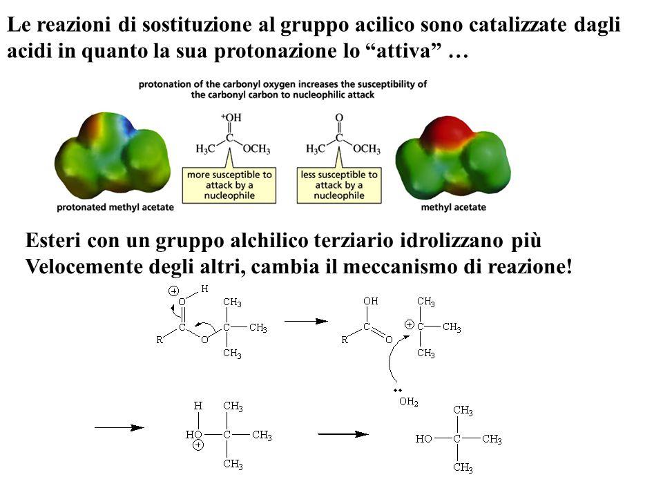 Le reazioni di sostituzione al gruppo acilico sono catalizzate dagli acidi in quanto la sua protonazione lo attiva …