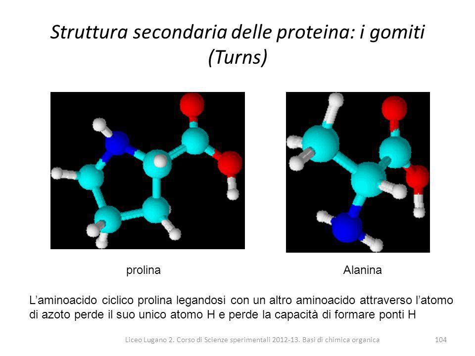 Struttura secondaria delle proteina: i gomiti (Turns)