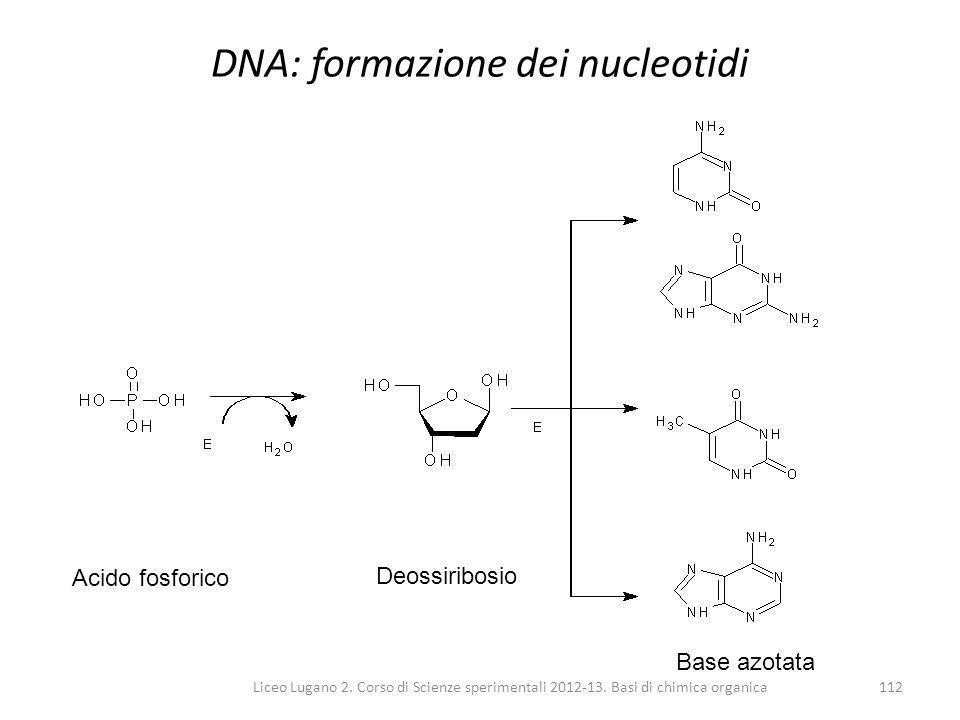 DNA: formazione dei nucleotidi