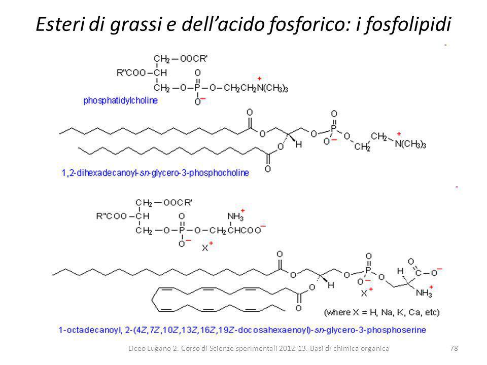 Esteri di grassi e dell'acido fosforico: i fosfolipidi