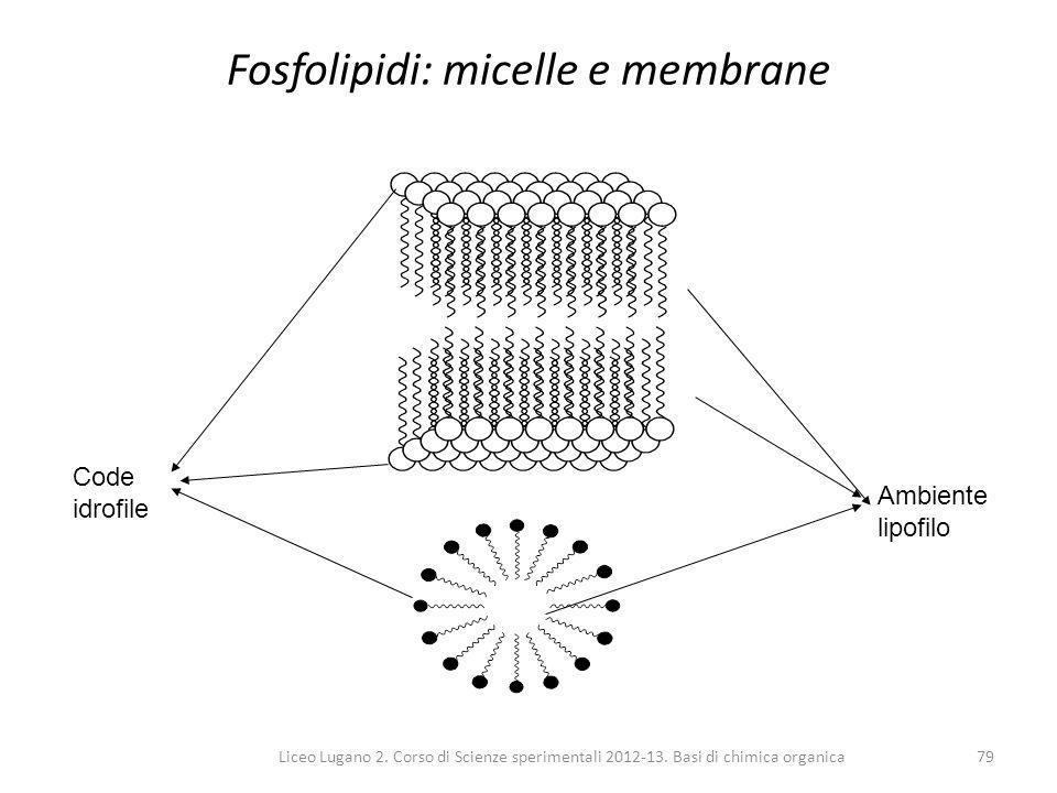 Fosfolipidi: micelle e membrane