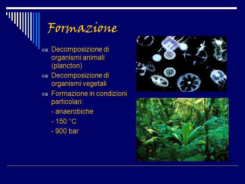 Formazione Decomposizione di organismi animali (plancton)