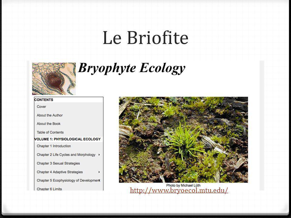 Le Briofite http://www.bryoecol.mtu.edu/