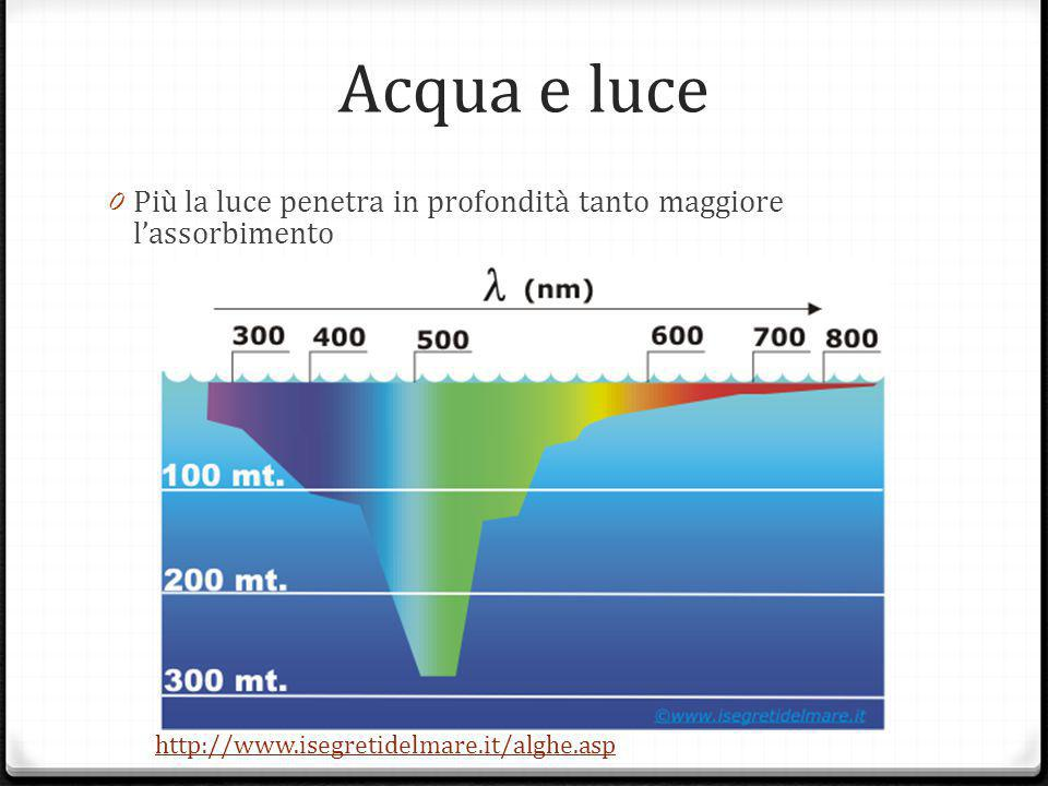 Acqua e luce Più la luce penetra in profondità tanto maggiore l'assorbimento.