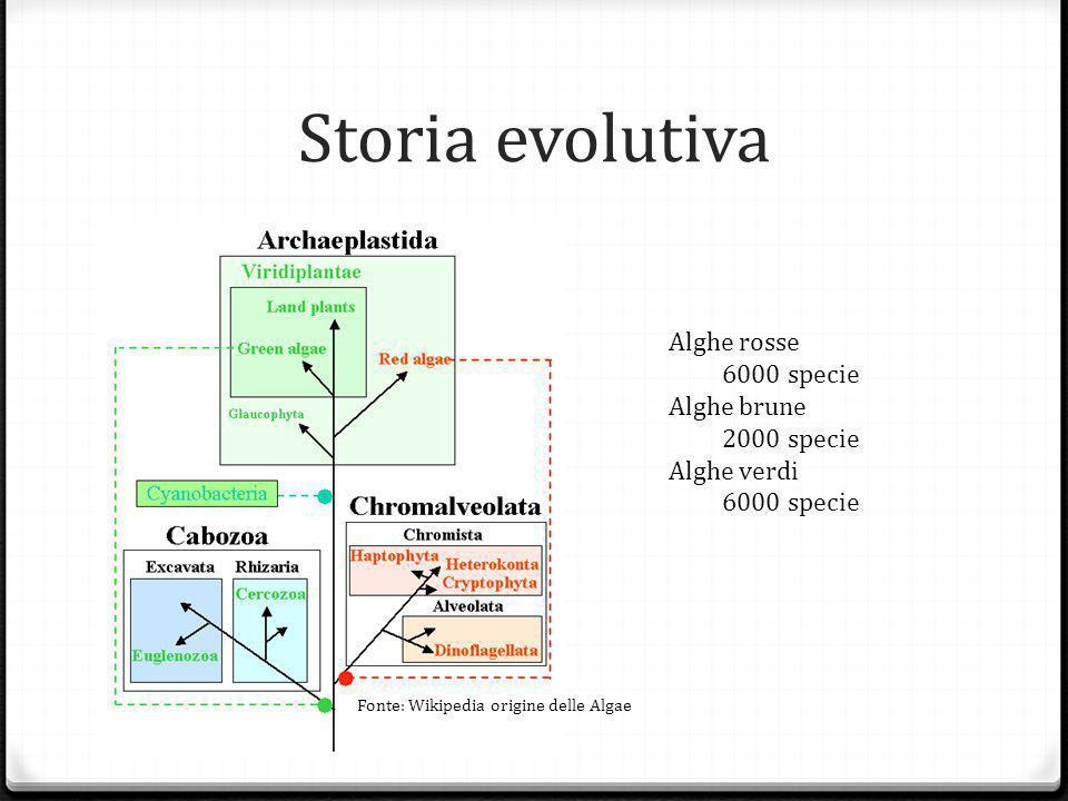 Storia evolutiva Alghe rosse 6000 specie Alghe brune 2000 specie