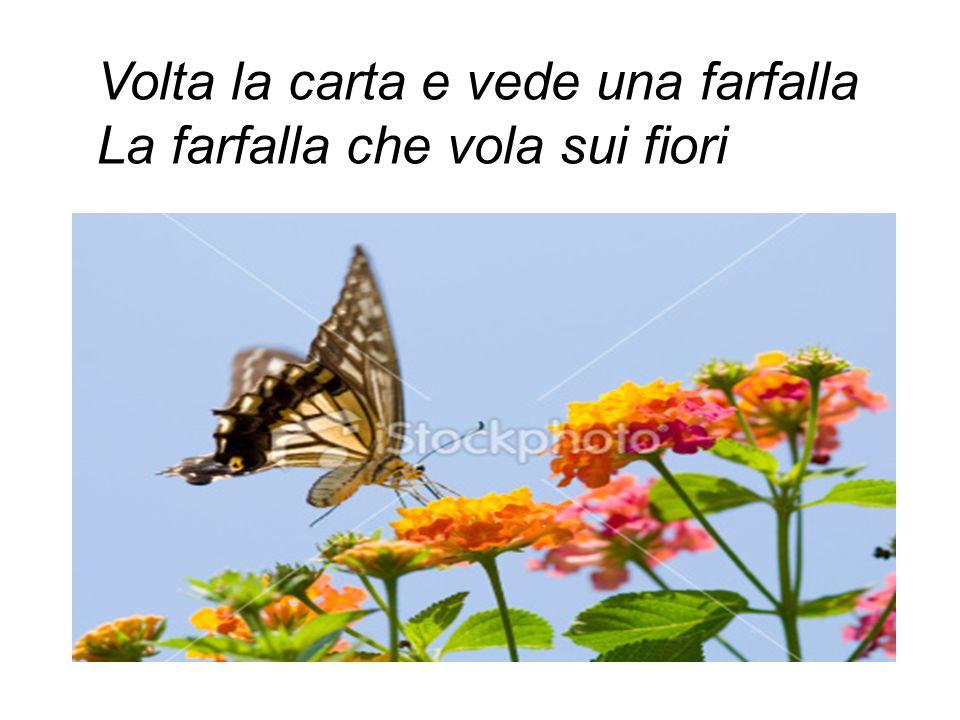 Volta la carta e vede una farfalla