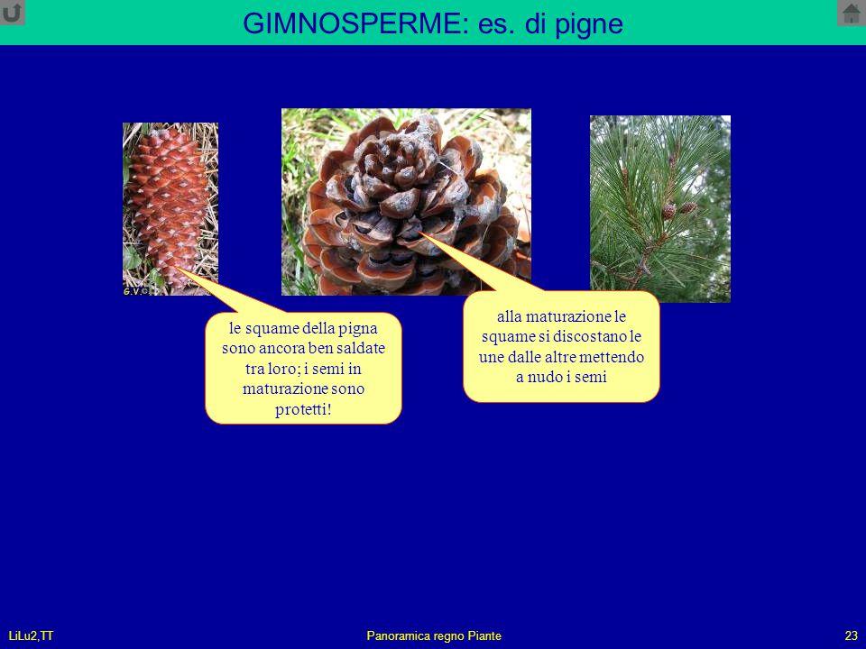 GIMNOSPERME: es. di pigne