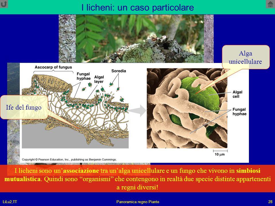 I licheni: un caso particolare