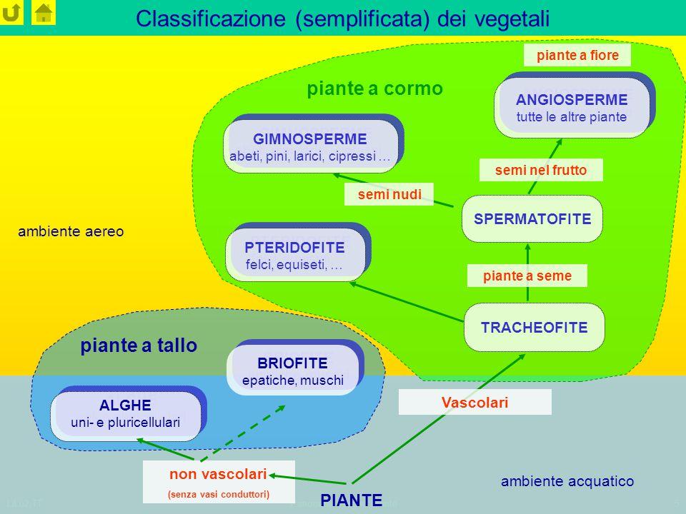 Classificazione (semplificata) dei vegetali