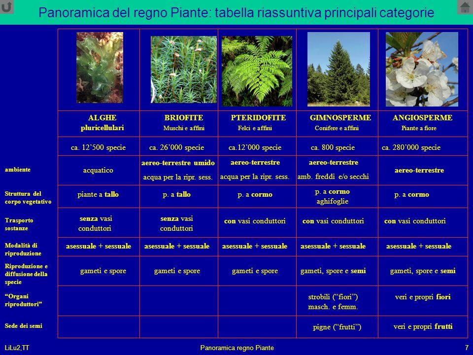 Panoramica del regno Piante: tabella riassuntiva principali categorie