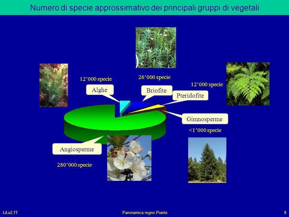 Numero di specie approssimativo dei principali gruppi di vegetali