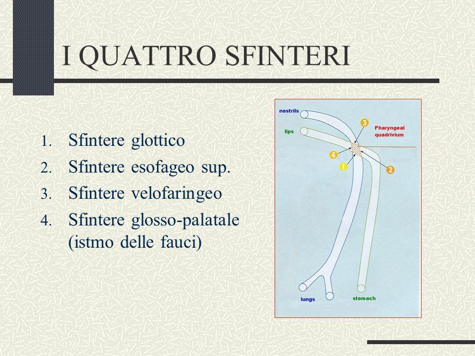 I QUATTRO SFINTERI Sfintere glottico Sfintere esofageo sup.