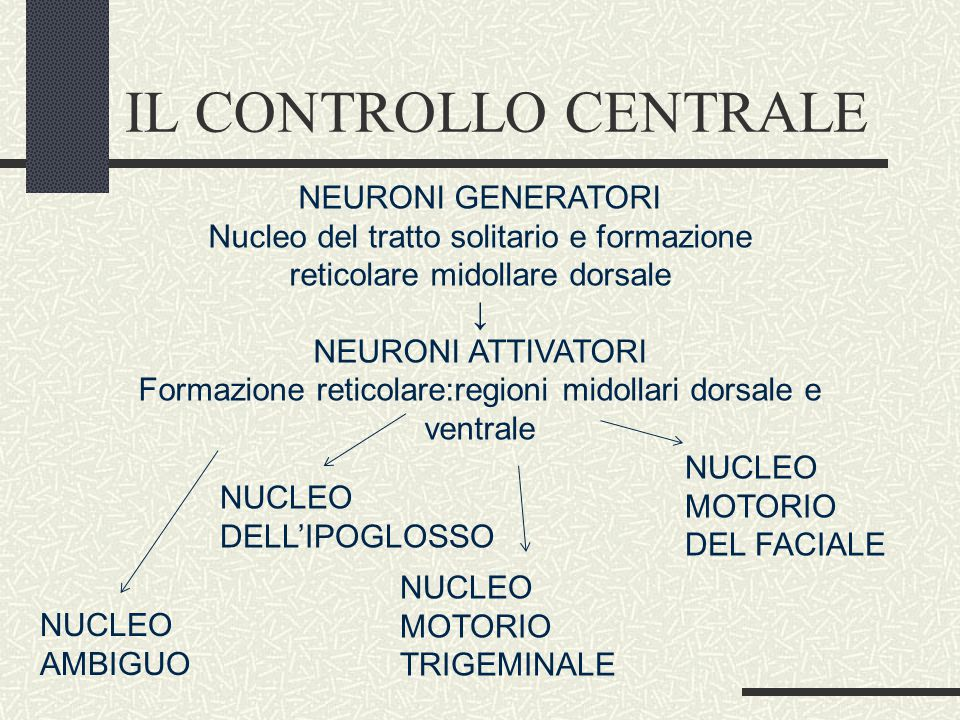 IL CONTROLLO CENTRALE NEURONI GENERATORI