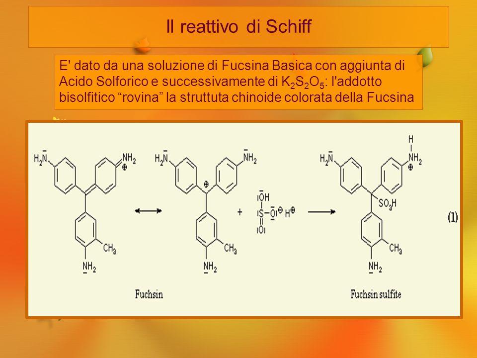Il reattivo di Schiff