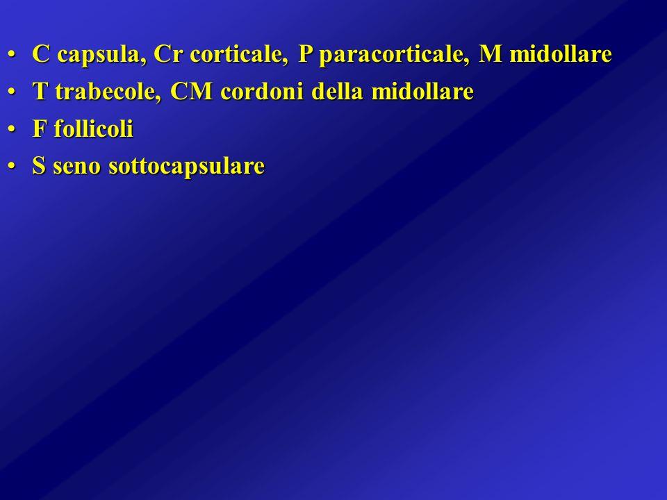 C capsula, Cr corticale, P paracorticale, M midollare
