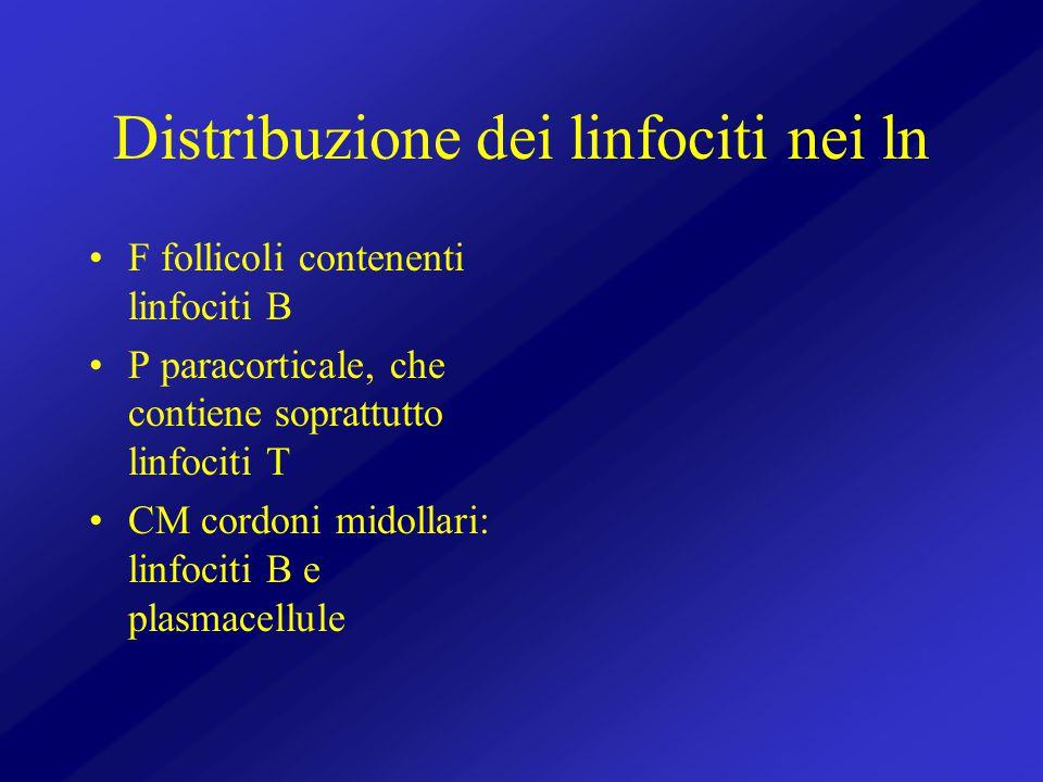 Distribuzione dei linfociti nei ln