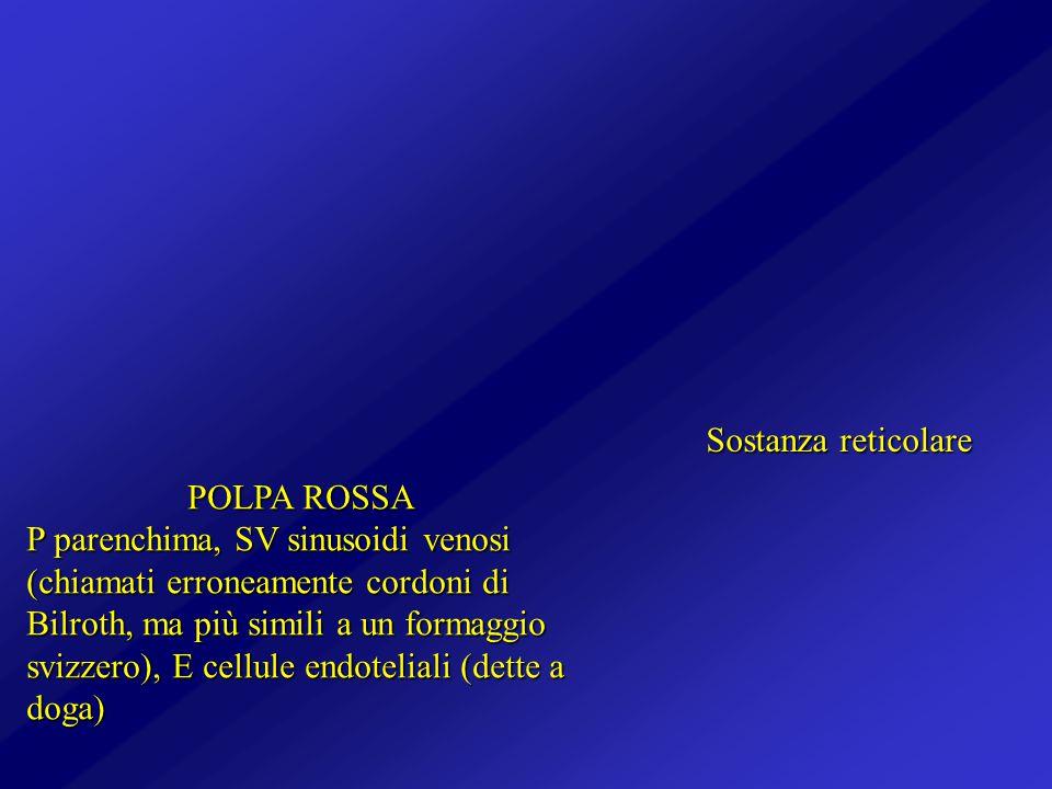 Sostanza reticolare POLPA ROSSA.