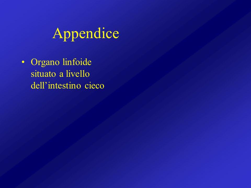 Appendice Organo linfoide situato a livello dell'intestino cieco