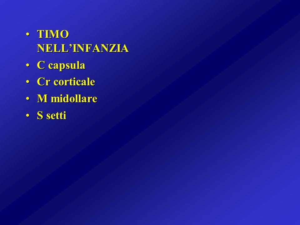 TIMO NELL'INFANZIA C capsula Cr corticale M midollare S setti