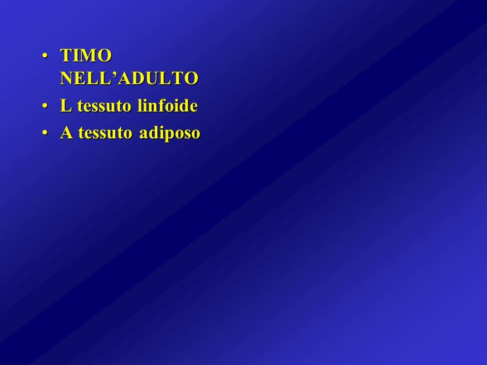 TIMO NELL'ADULTO L tessuto linfoide A tessuto adiposo