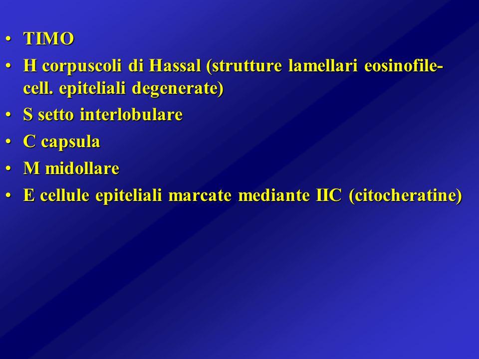 TIMO H corpuscoli di Hassal (strutture lamellari eosinofile-cell. epiteliali degenerate) S setto interlobulare.
