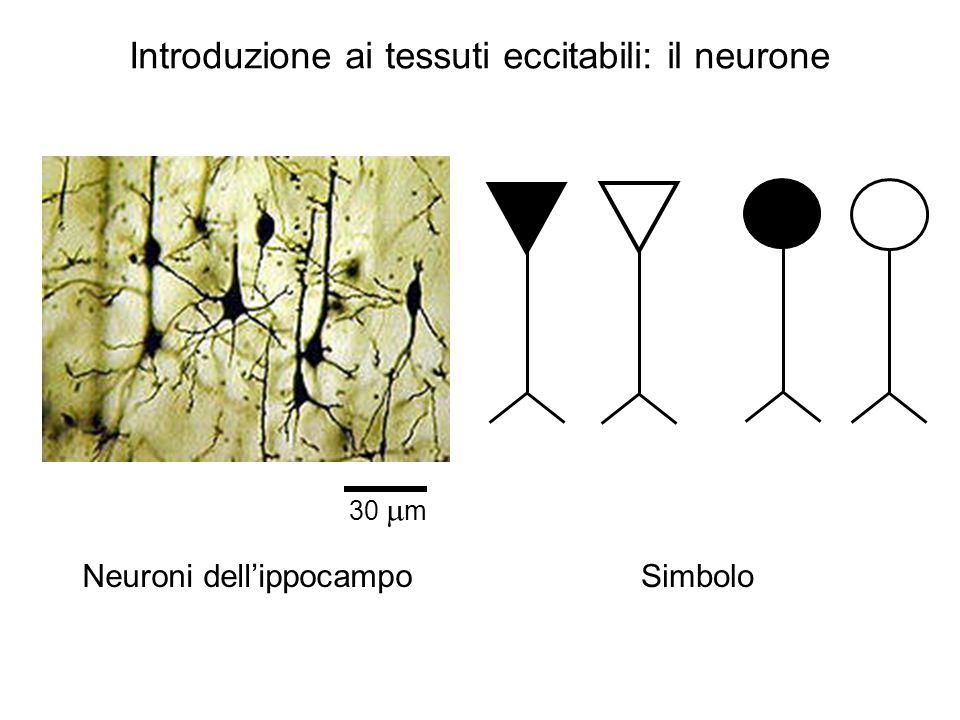 Introduzione ai tessuti eccitabili: il neurone
