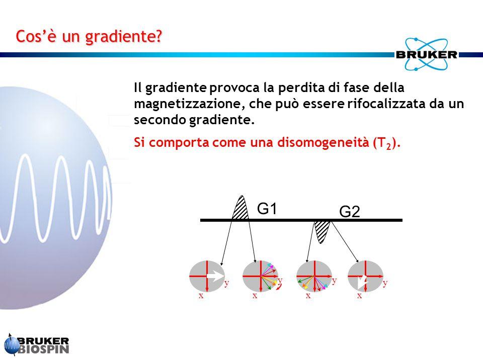 Cos'è un gradiente Il gradiente provoca la perdita di fase della magnetizzazione, che può essere rifocalizzata da un secondo gradiente.