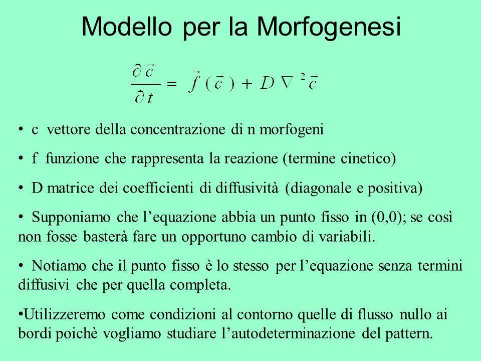 Modello per la Morfogenesi
