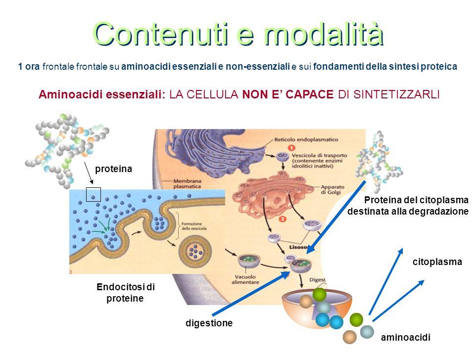 Contenuti e modalità 1 ora frontale frontale su aminoacidi essenziali e non-essenziali e sui fondamenti della sintesi proteica.