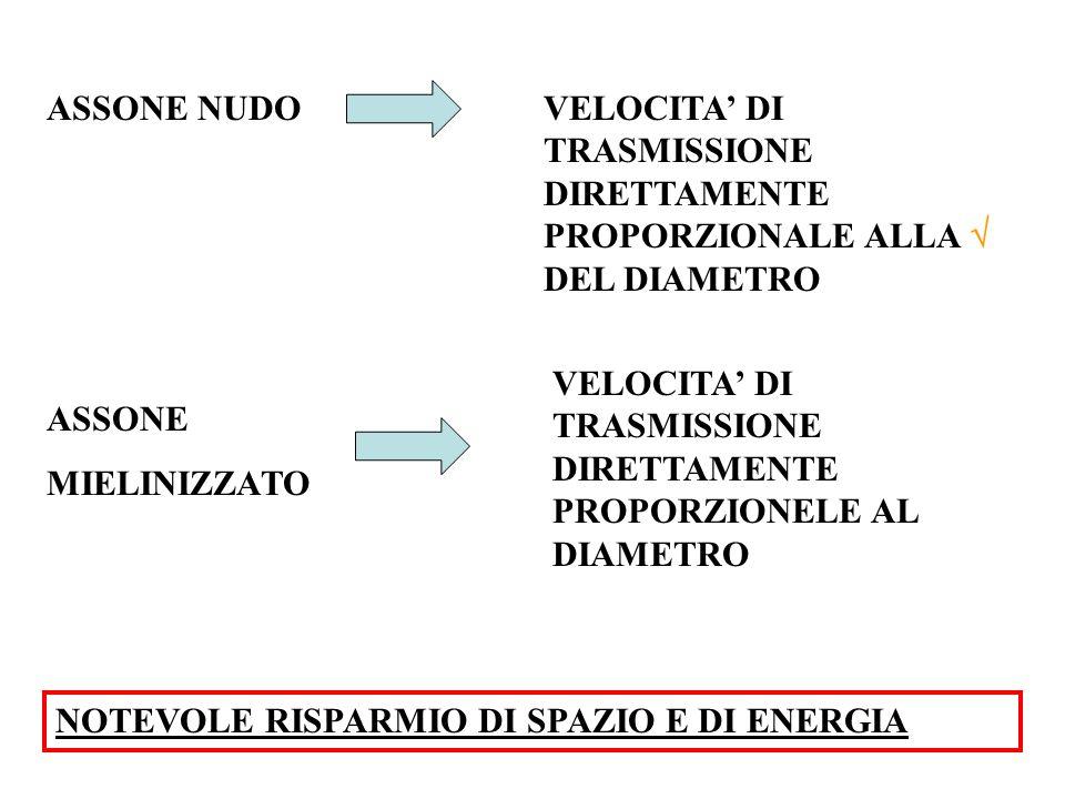 ASSONE NUDO VELOCITA' DI TRASMISSIONE DIRETTAMENTE PROPORZIONALE ALLA  DEL DIAMETRO.